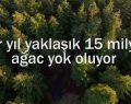 Bir Yılda Türkiye'nin Yarısı Kadar Orman Yok Oldu