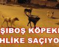 İnegöl'de Başı Boş Köpekler Dehşet Saçmaya Devam Ediyor