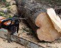 Kesim Sırasında Üzerine Ağaç Devrildi
