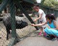 Karneyi Alan Hayvanat Bahçesine Koştu