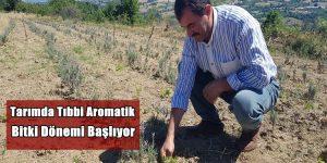 Tarımda Tıbbi Aromatik Bitki Dönemi Başlıyor