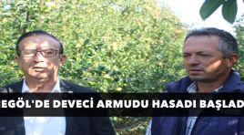 DEVECİ ARMUDUNDA HASAT BAŞLADI